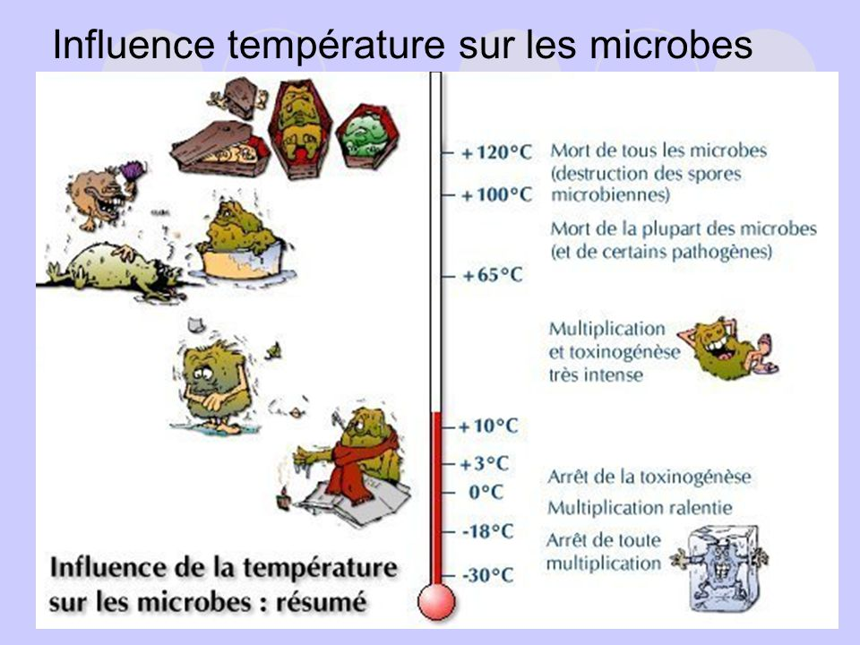 D, le temps de réduction décimale: Temps quil faut pour réduire dun facteur 10 (ou dun log) la population étudiée (cest à dire de 90%) pour une température donnée et dans des conditions données.