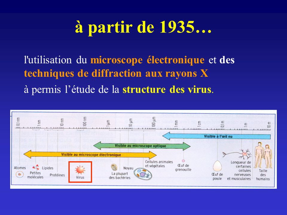 à partir de 1935… l'utilisation du microscope électronique et des techniques de diffraction aux rayons X à permis létude de la structure des virus.