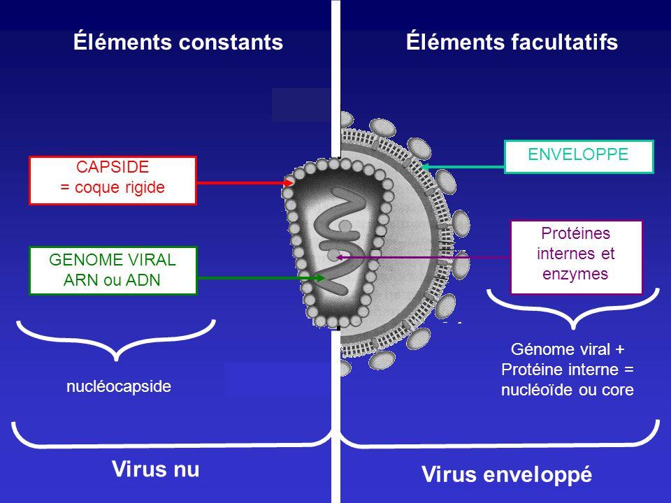 Éléments constantsÉléments facultatifs CAPSIDE = coque rigide GENOME VIRAL ARN ou ADN nucléocapside Virus nu ENVELOPPE Virus enveloppé Protéines inter