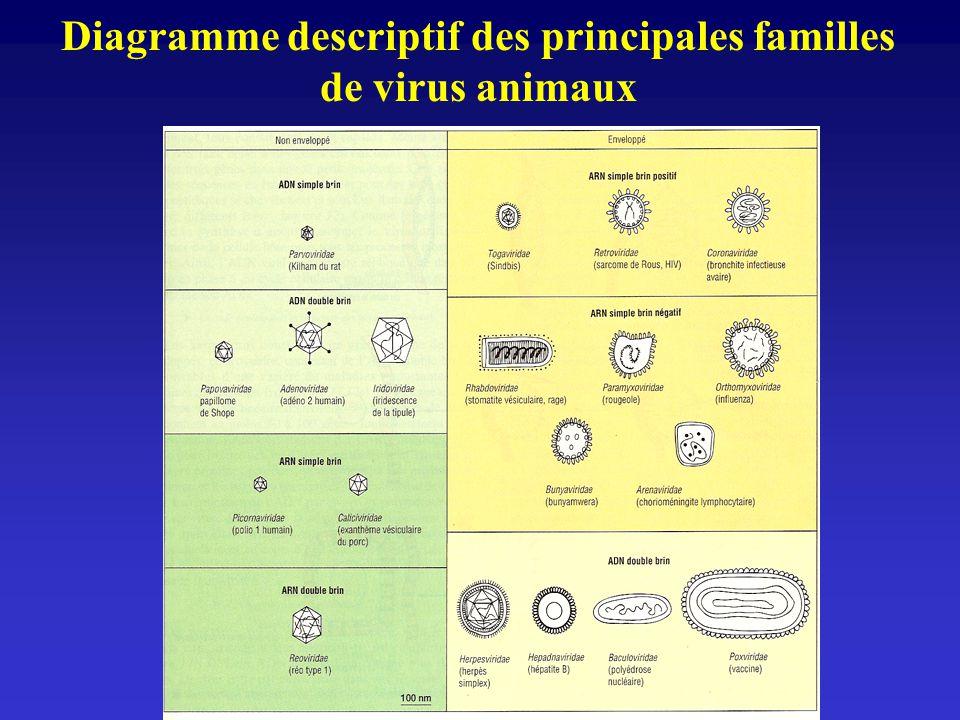 Diagramme descriptif des principales familles de virus animaux