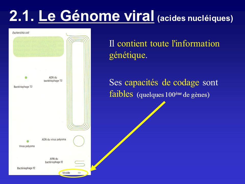 2.1. Le Génome viral (acides nucléiques) Il contient toute l'information génétique. Ses capacités de codage sont faibles (quelques 100 ène de gènes)