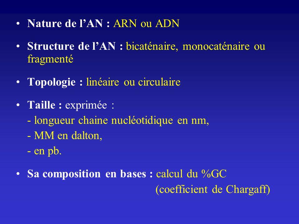 Nature de lAN : ARN ou ADN Structure de lAN : bicaténaire, monocaténaire ou fragmenté Topologie : linéaire ou circulaire Taille : exprimée : - longueu