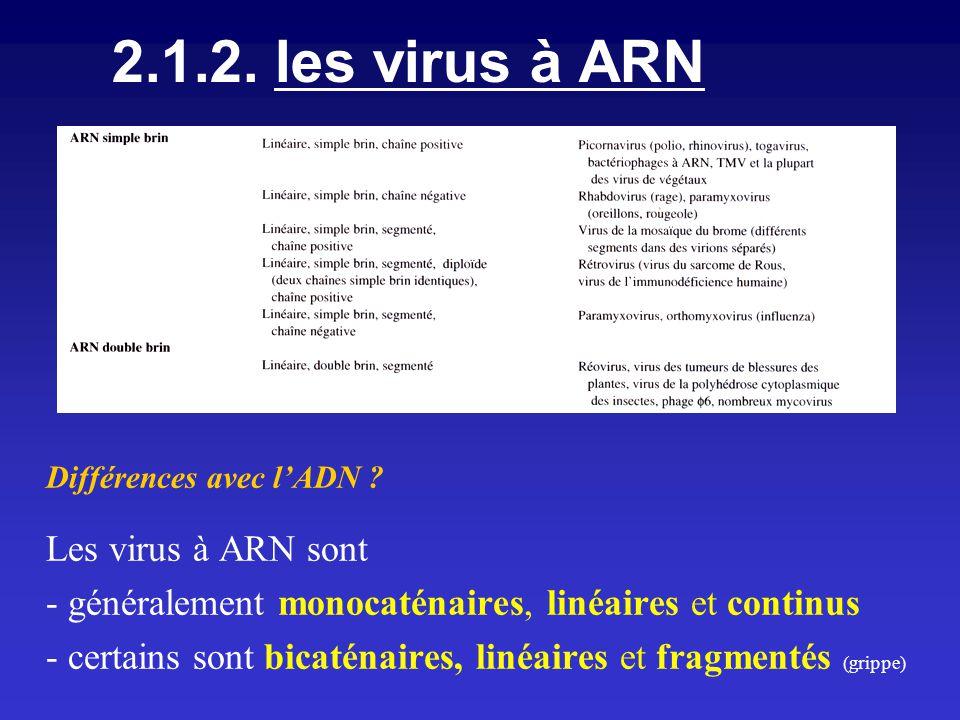 2.1.2. les virus à ARN Différences avec lADN ? Les virus à ARN sont - généralement monocaténaires, linéaires et continus - certains sont bicaténaires,