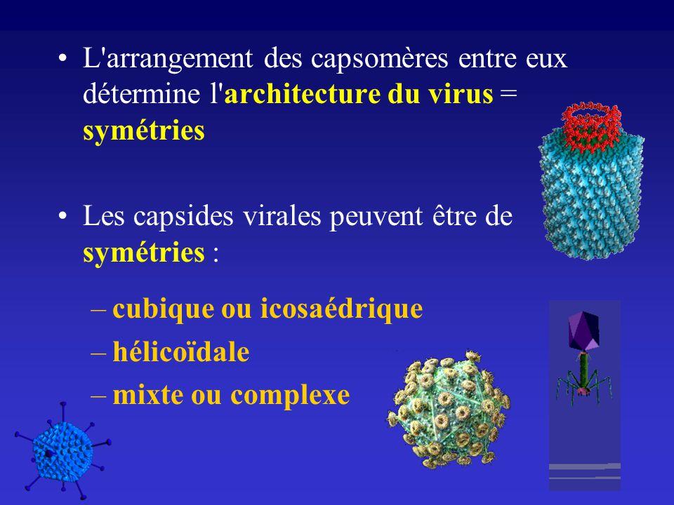 L'arrangement des capsomères entre eux détermine l'architecture du virus = symétries Les capsides virales peuvent être de symétries : –cubique ou icos