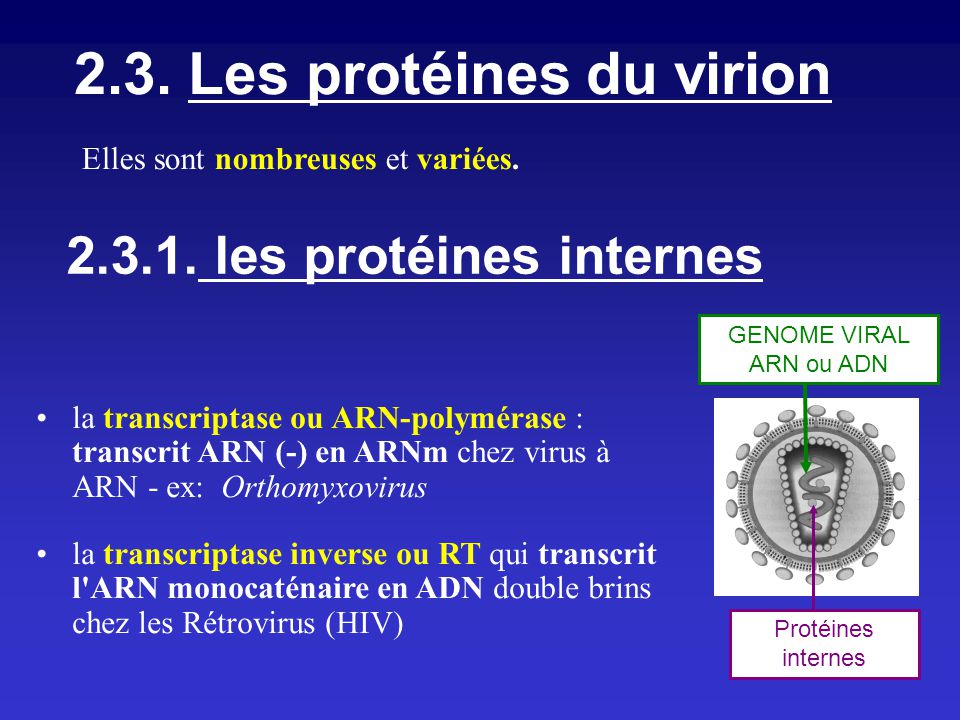 2.3. Les protéines du virion 2.3.1. les protéines internes GENOME VIRAL ARN ou ADN Protéines internes Elles sont nombreuses et variées. la transcripta
