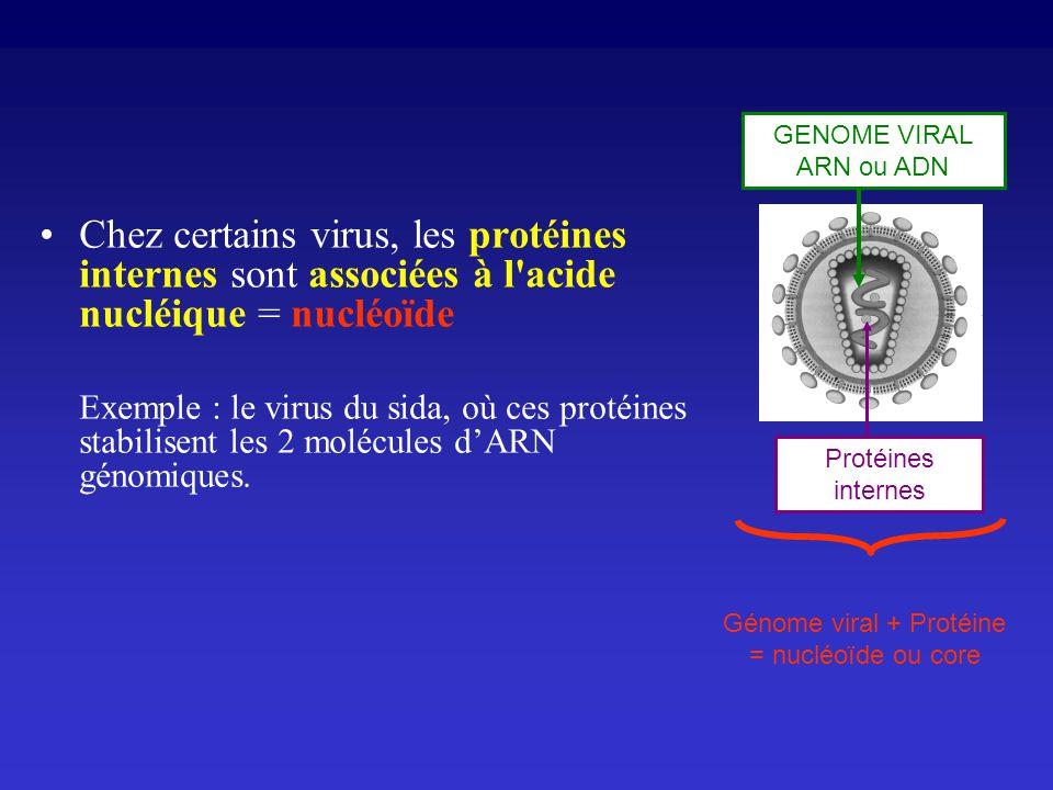 Chez certains virus, les protéines internes sont associées à l'acide nucléique = nucléoïde Exemple : le virus du sida, où ces protéines stabilisent le
