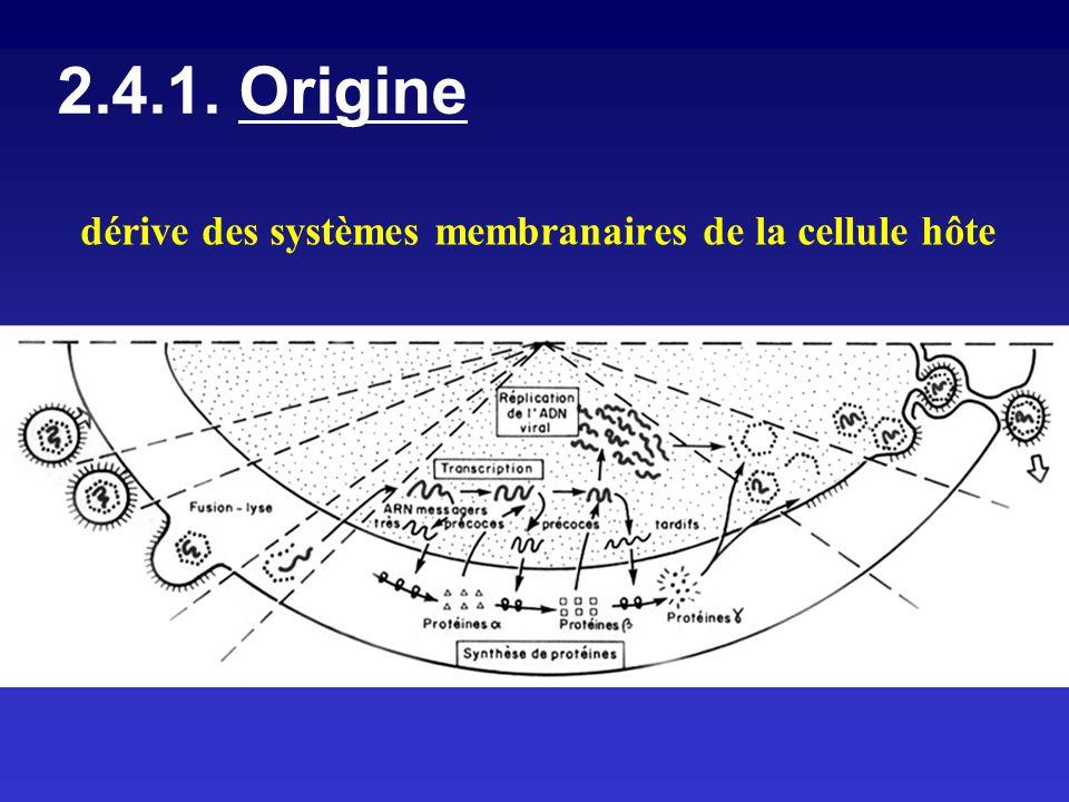 2.4.1. Origine dérive des systèmes membranaires de la cellule hôte
