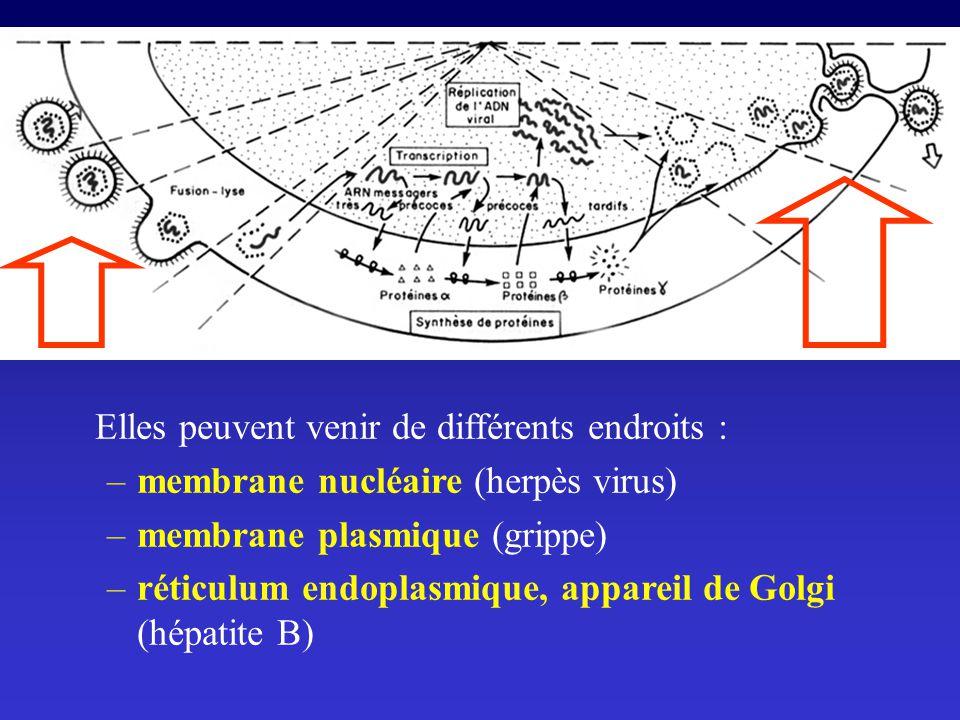 Elles peuvent venir de différents endroits : –membrane nucléaire (herpès virus) –membrane plasmique (grippe) –réticulum endoplasmique, appareil de Gol