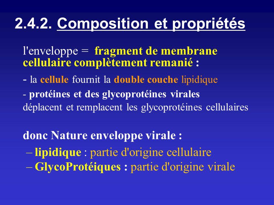 2.4.2. Composition et propriétés l'enveloppe = fragment de membrane cellulaire complètement remanié : - la cellule fournit la double couche lipidique