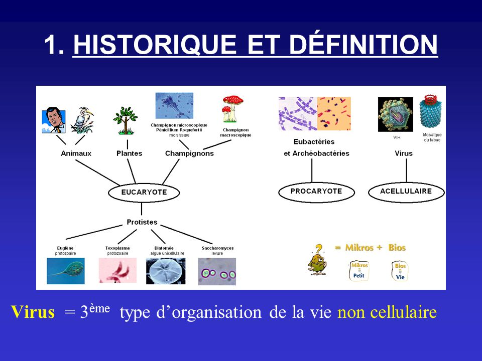 1. HISTORIQUE ET DÉFINITION Virus = 3 ème type dorganisation de la vie non cellulaire