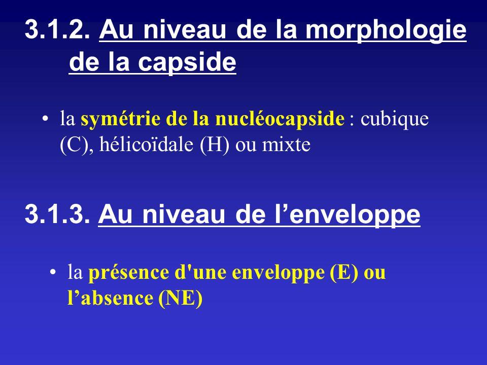 la symétrie de la nucléocapside : cubique (C), hélicoïdale (H) ou mixte 3.1.2. Au niveau de la morphologie de la capside 3.1.3. Au niveau de lenvelopp