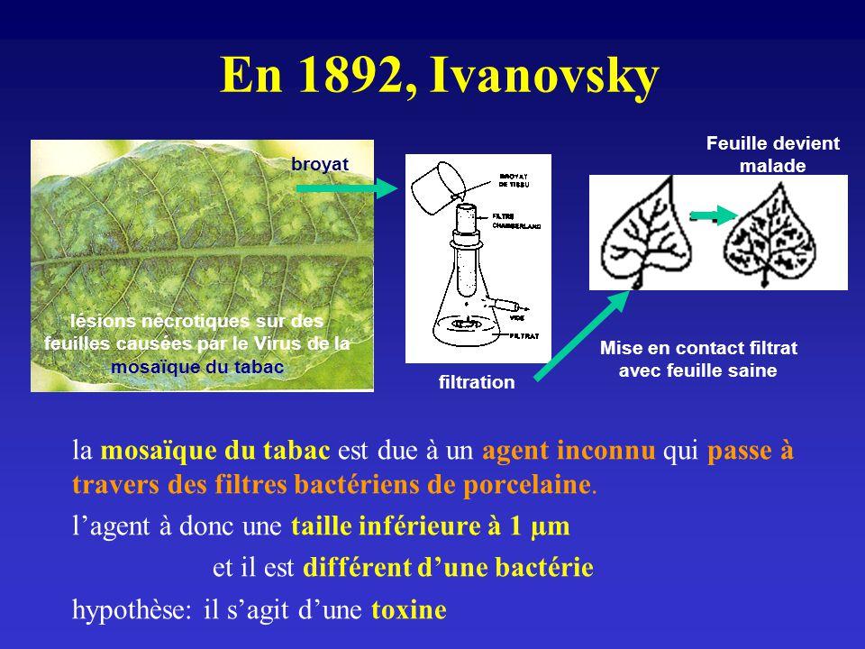 En 1892, Ivanovsky la mosaïque du tabac est due à un agent inconnu qui passe à travers des filtres bactériens de porcelaine. lagent à donc une taille
