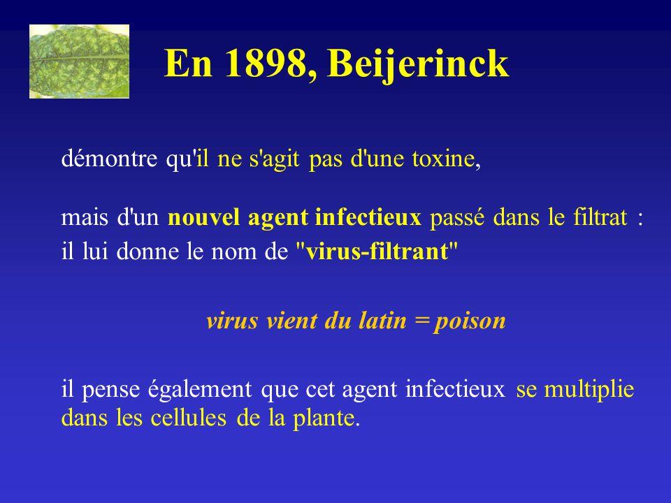 En 1898, Beijerinck démontre qu'il ne s'agit pas d'une toxine, mais d'un nouvel agent infectieux passé dans le filtrat : il lui donne le nom de