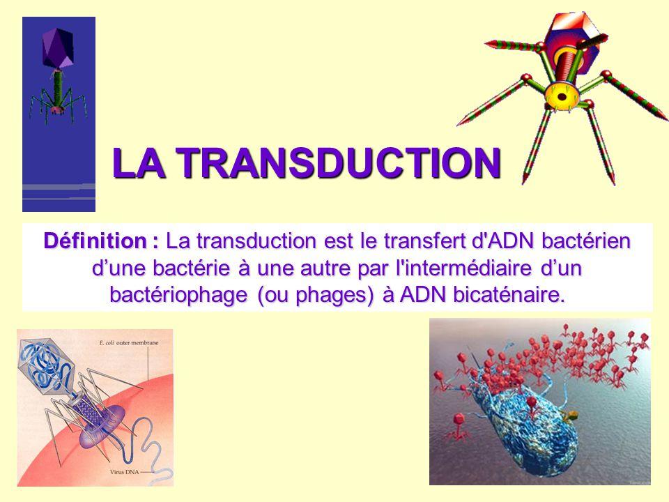 LA TRANSDUCTION Définition : La transduction est le transfert d'ADN bactérien dune bactérie à une autre par l'intermédiaire dun bactériophage (ou phag