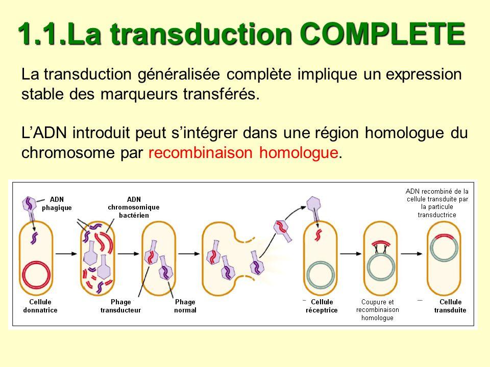 1.1.La transduction COMPLETE La transduction généralisée complète implique un expression stable des marqueurs transférés. LADN introduit peut sintégre