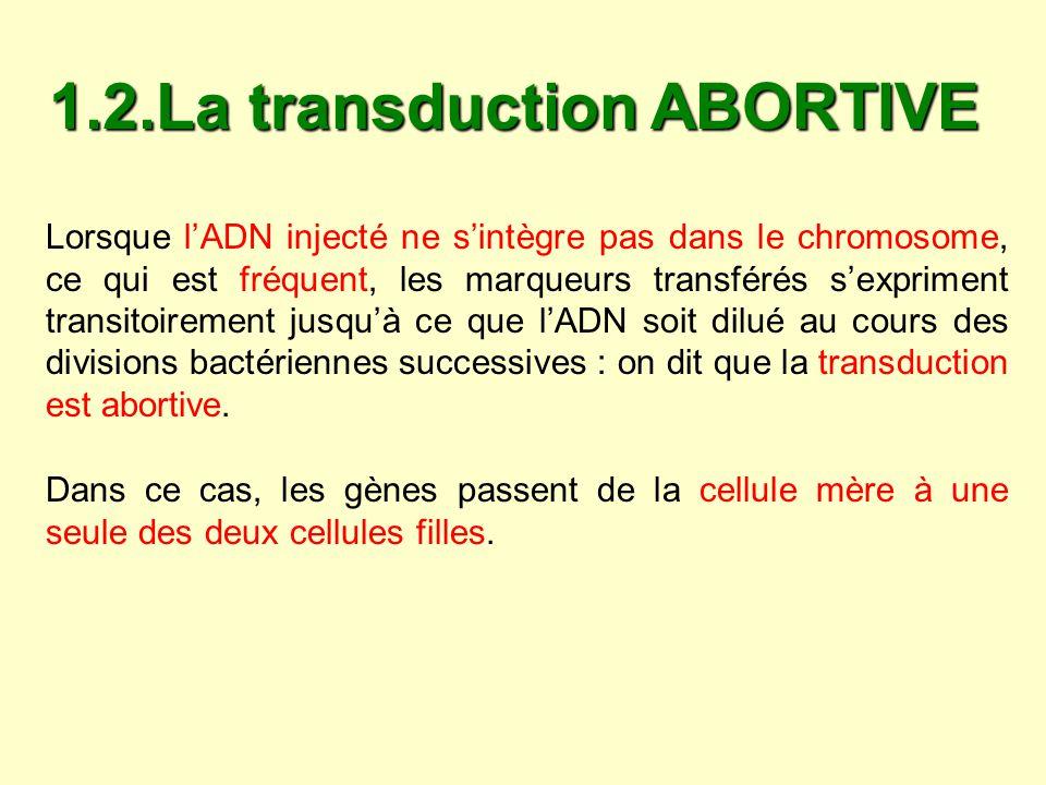 1.2.La transduction ABORTIVE Lorsque lADN injecté ne sintègre pas dans le chromosome, ce qui est fréquent, les marqueurs transférés sexpriment transit