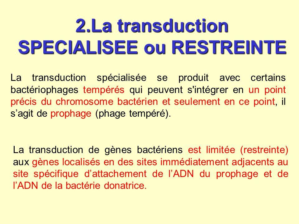 2.La transduction SPECIALISEE ou RESTREINTE La transduction spécialisée se produit avec certains bactériophages tempérés qui peuvent s'intégrer en un