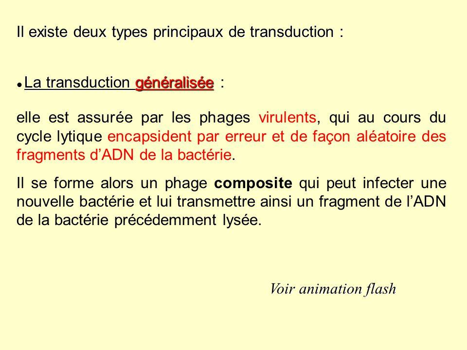 Il existe deux types principaux de transduction : La transduction généralisée La transduction généralisée : elle est assurée par les phages virulents,
