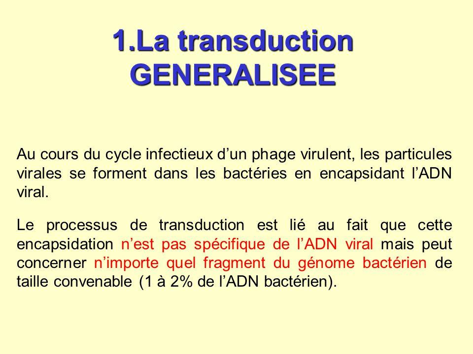 1.La transduction GENERALISEE Au cours du cycle infectieux dun phage virulent, les particules virales se forment dans les bactéries en encapsidant lAD