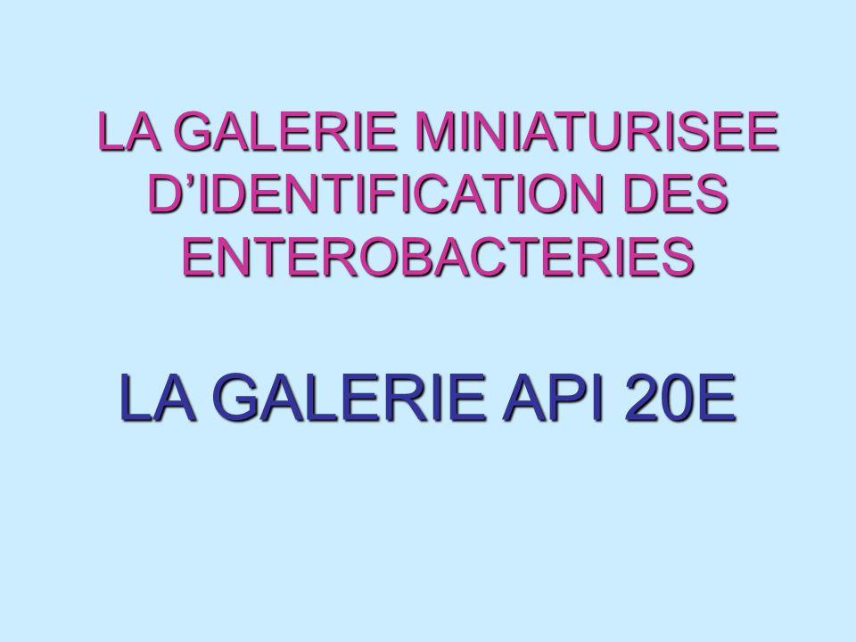 LA GALERIE MINIATURISEE DIDENTIFICATION DES ENTEROBACTERIES LA GALERIE API 20E