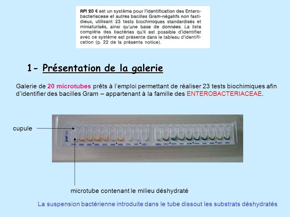 5 2 1 5 7 7 3 5 + + - Code n°: 5 215 773 (55) + + 5 Se référer au catalogue pour identifier la souche à laide du code Résultats de la galerie: Résultats reportés sur la fiche didentification