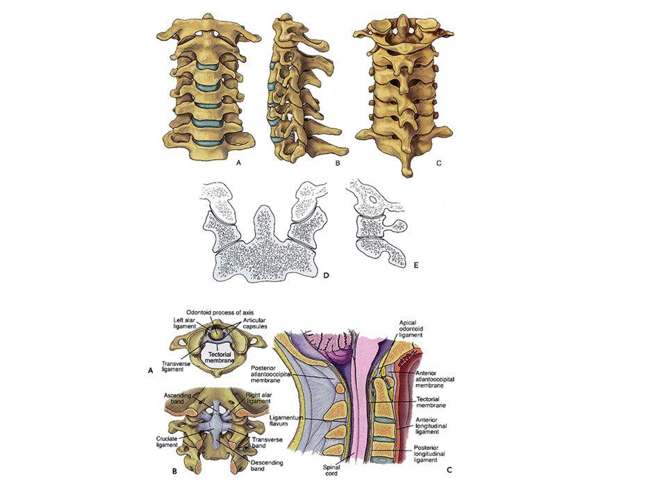 Fracture de latlas Lig.transverse NormalRompu (d >7mm) Immob.
