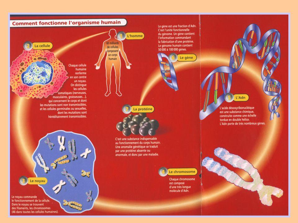 Historique 1993 : Famille de SVSA avec translocation équilibrée chromosome 6 et chromosome 7