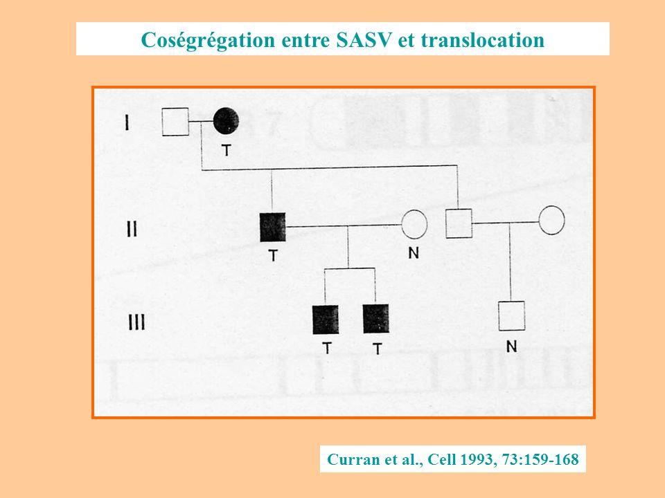 Analyse : la translocation entraîne une cassure du chromosome 7, dans le gène de lélastine Curran et al., Cell 1993, 73:159-168