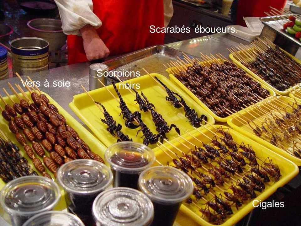 Scorpions noirs Vers à soie Cigales Scarabés éboueurs.