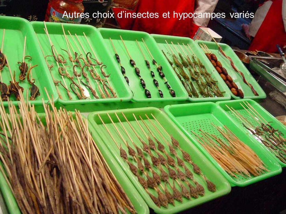 Autres choix dinsectes et hypocampes variés