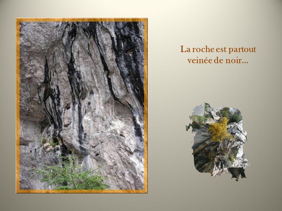 Avant darriver à laccueil, on découvre la grotte de la Petite Caougno, grotte de 450 m de profondeur dont la fréquentation remonte au Néolithique. Ell