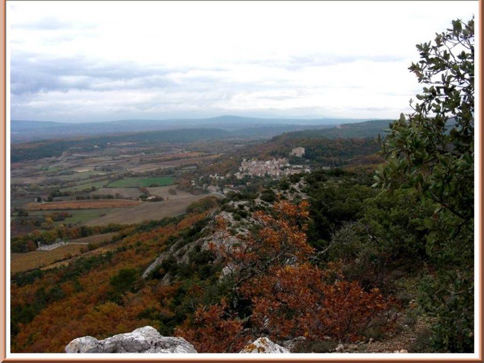 Le PEBRE DAIL ce qui veut dire en provençal, le poivre dâne.