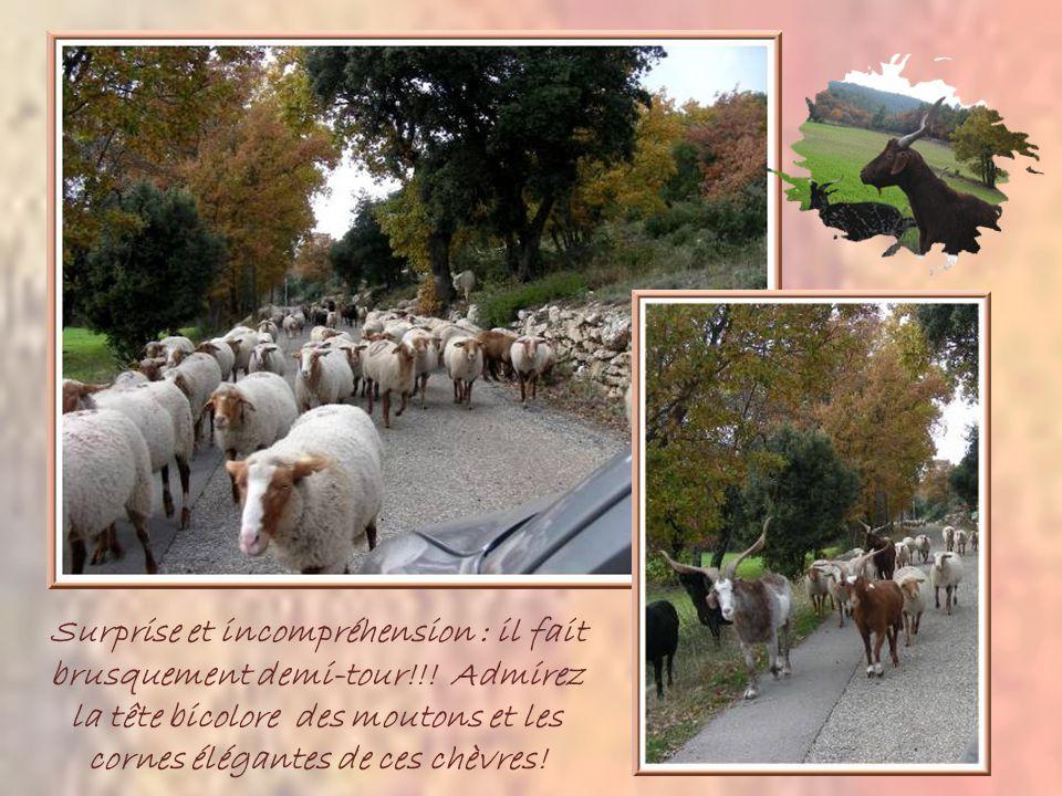 Pour agrémenter le retour à Aix, jai décidé de choisir une autre route passant par le Col de Portes.