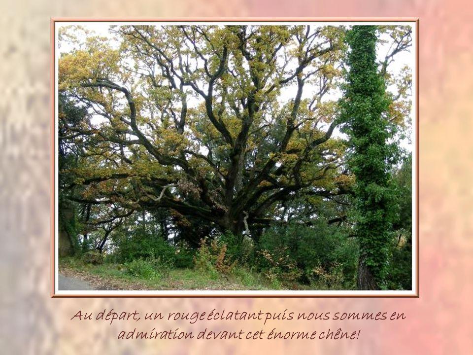 Au départ, un rouge éclatant puis nous sommes en admiration devant cet énorme chêne!