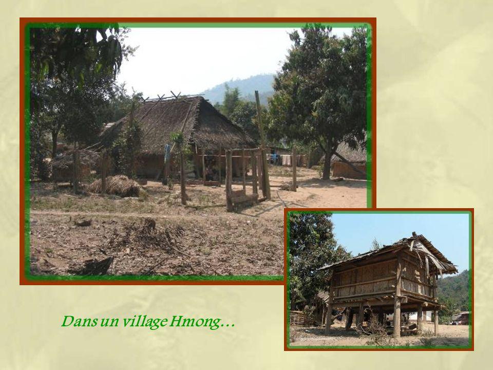 Le nord du Laos est le lieu de résidence de plusieurs ethnies très différentes les unes des autres, que ce soit par leur langue, leurs croyances ou le