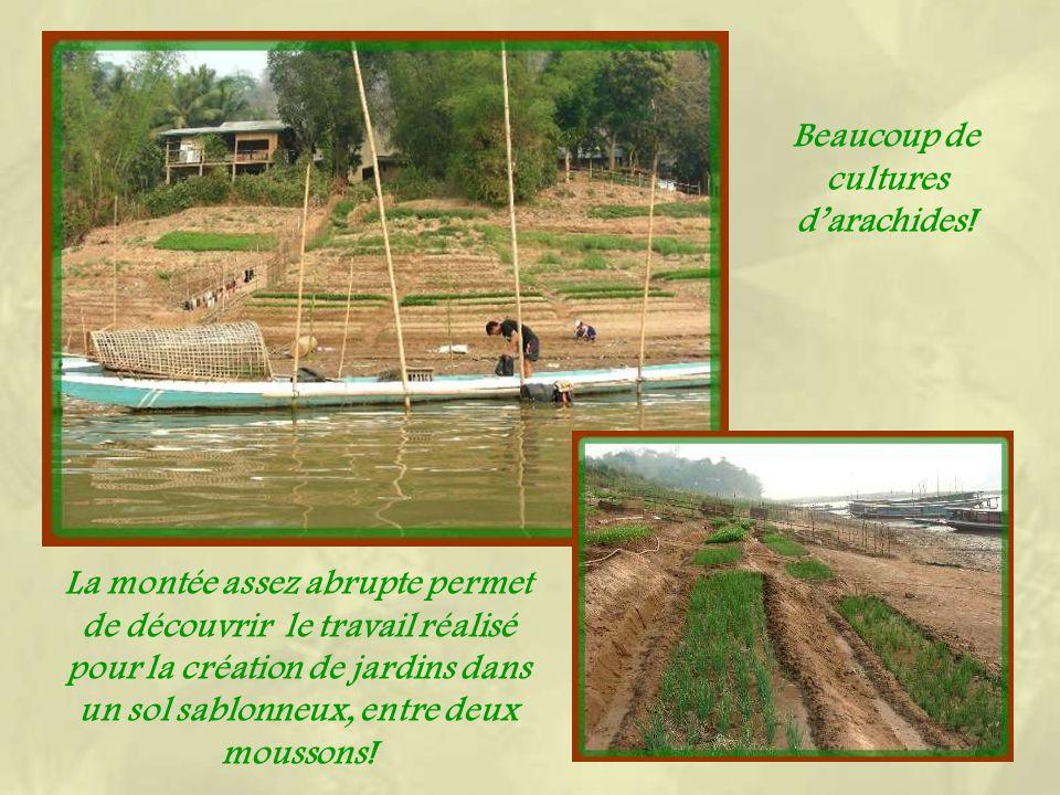 Face à Luang Prabang, une courte traversée en bateau permet daccéder au district de Xieng Men. Outre la vie des villages, on peut découvrir encore des
