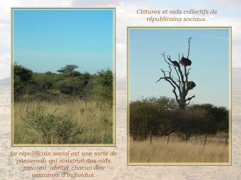 A perte de vue, un nombre incroyable de très grosses termitières.