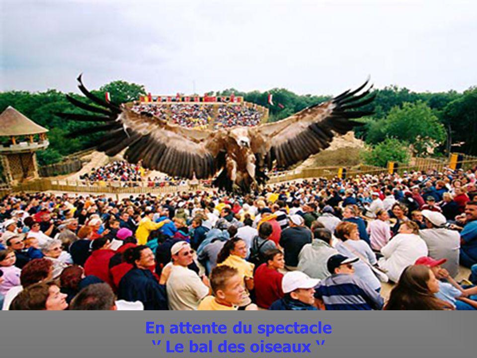 Colonie de Crécelles en route pour le Bal des Oiseaux Fantômes.
