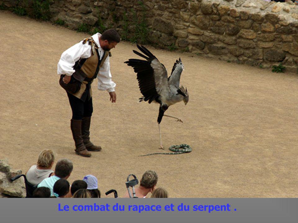 Spectacle de fauconnerie,avec la chasse au faucon.
