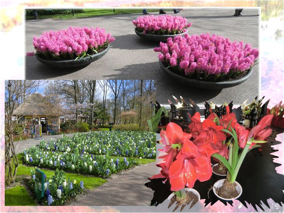 Sortie du parc Évidemment il y a un marché aux fleurs à la sortie. ( commerce oblige )
