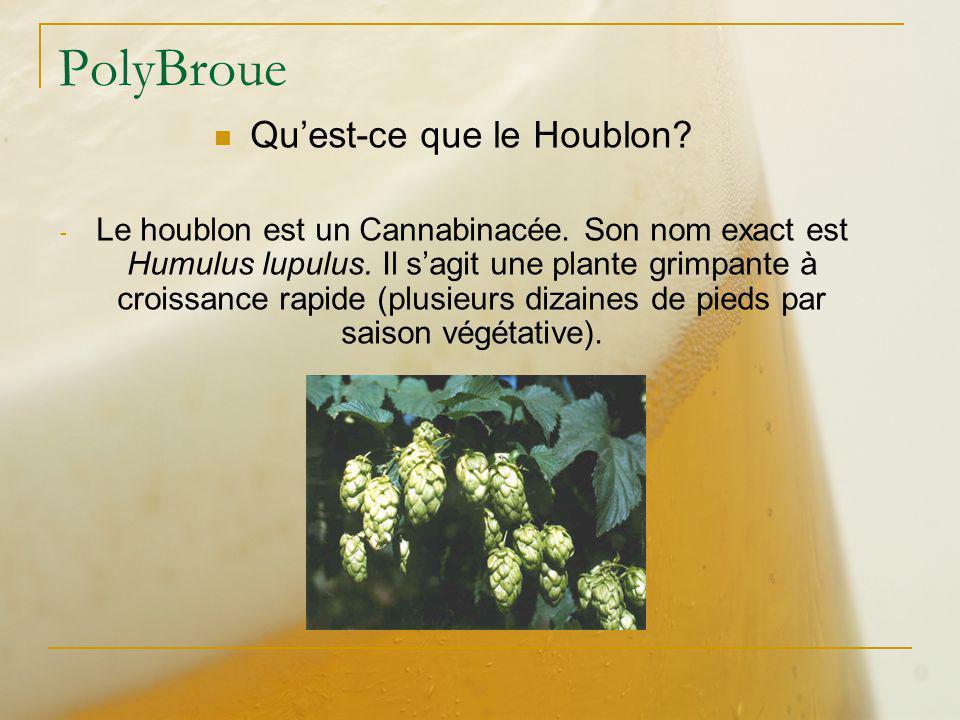 PolyBroue Quest-ce que le Houblon? - Le houblon est un Cannabinacée. Son nom exact est Humulus lupulus. Il sagit une plante grimpante à croissance rap