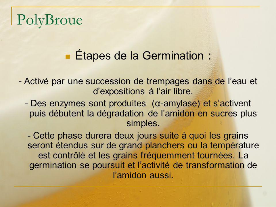 PolyBroue Étapes de la Germination : - Activé par une succession de trempages dans de leau et dexpositions à lair libre. - Des enzymes sont produites