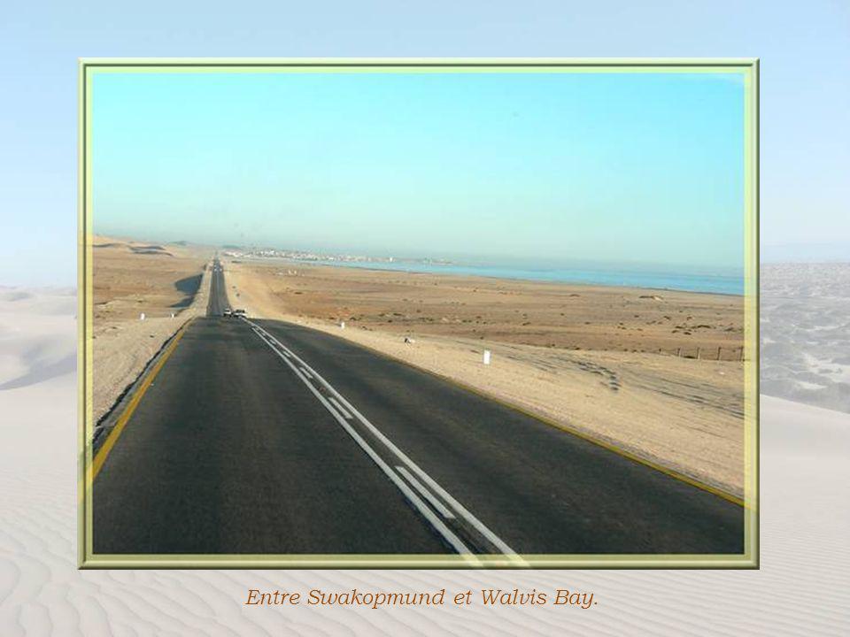 Par une route rectiligne longeant la mer nous allons atteindre Walvis Bay. Cest une ville denviron 50 000 habitants, sans grande particularité, essent