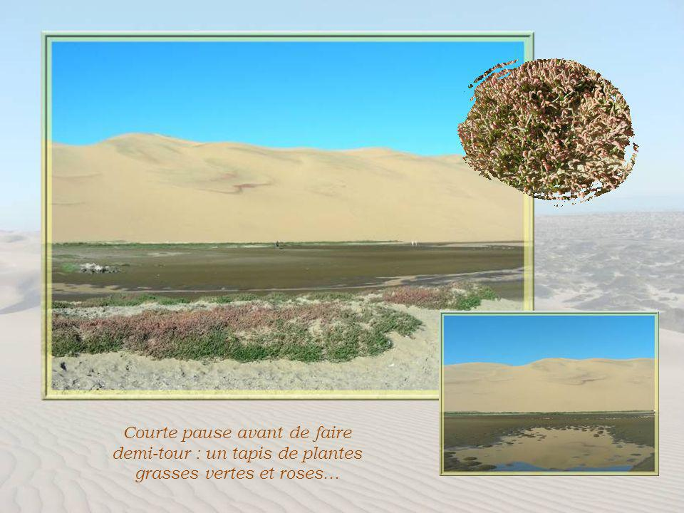 Entre dunes et océan.