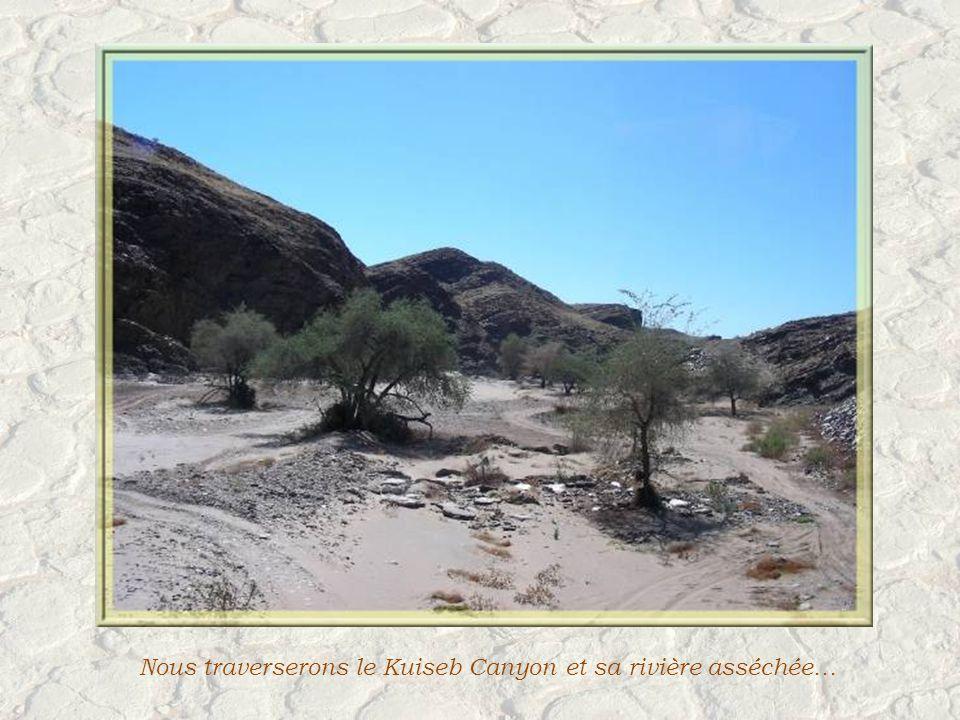 Il ny a pas de cactus en Namibie mais beaucoup de succulentes, dont ces euphorbes.