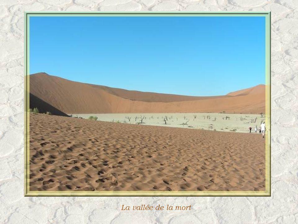 La vie que lon observe dans ce désert.