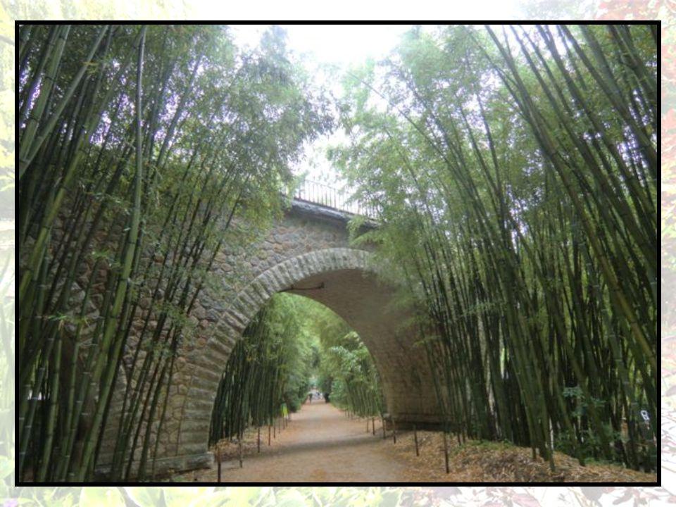 Ce jardin est le paradis du bambou, mais pas seulement, il est un lieu de calme et sérénité (à condition dy venir, comme nous, au mois de juin ), il respire lOrient avec le village Laotien et ces petits coins deau aux contours délicats où les petites barques joliment faites nous transportent dans ces pays du Sud-est asiatique.