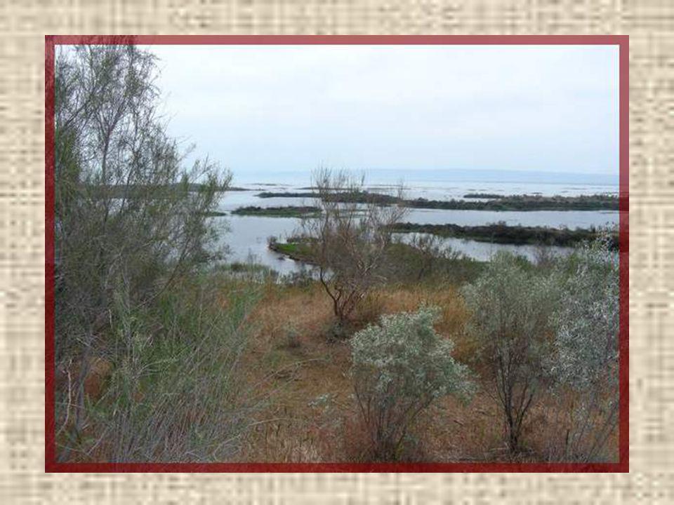 Un peu plus au nord, nous allons découvrir le lac Aïdarkoul. Il sétend sur plus de 200 km dans le désert. Il a été créé, en 1969, par la construction,