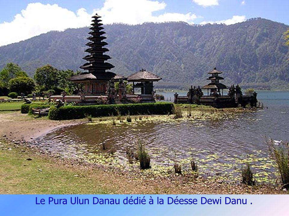 Les Meru à Bali.