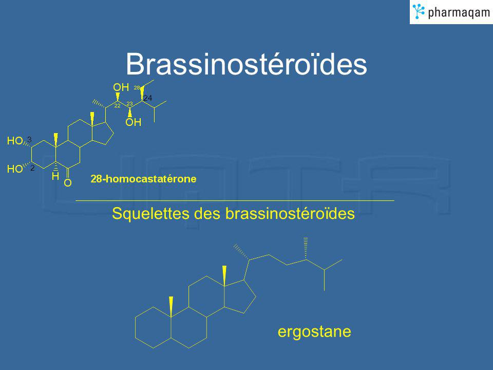 Brassinostéroïdes 2 3 24 Squelettes des brassinostéroïdes ergostane